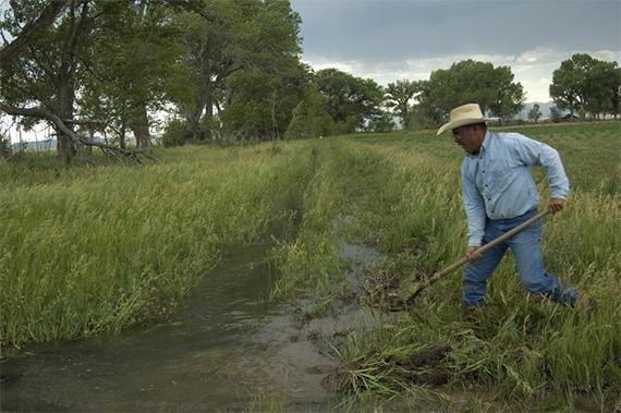 Cimarron irrigation.